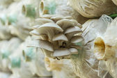 Mushrooms Growing In A Farm — Stock Photo