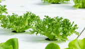 Convert vegetables Non-toxic green healthy choices. — Stock Photo