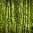 Stock Photo: Green Wood Texture
