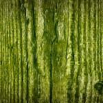 Green Wood Texture — Stock Photo