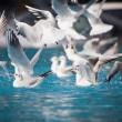 Birds on the water — Stock Photo #39571805