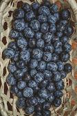 Blueberry — Stock fotografie