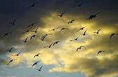 Flying away — Stock Photo