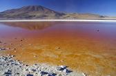 Laguna Colorada — Foto Stock