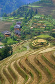 Rice Terraces in China — Stock Photo