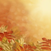 Autumn background — Foto de Stock