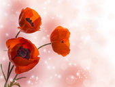 Three poppy — Stockfoto