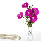Bouquet of pink petunias — Stock Photo