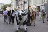черно-белая корова — Стоковое фото