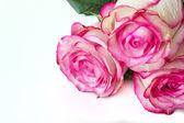 Tre rosor — Stockfoto