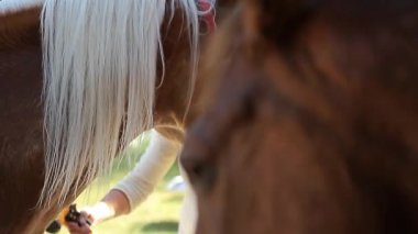 Horse, Head Closeup (Animals) — Stock Video