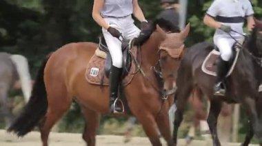 显示跳跃与马 — 图库视频影像