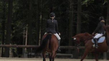 Saltos com cavalos — Vídeo stock