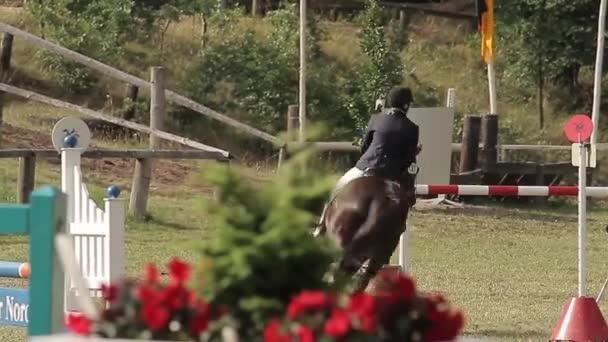 Saut d'obstacles avec des chevaux — Vidéo