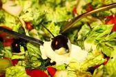 Salad oliva — Stock Photo