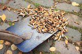 Cleaning a lot of cigarette garbage with a shovel — Stock Photo