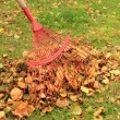 Stock Photo: Raking leaves from autumn garden