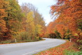 Empty road in autumn forest with beautiful colors — Stock Photo