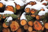 Pile of timber with snow in early winter — Foto de Stock