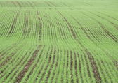 Crop field in spring with harrow trace — Stock Photo
