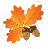 Acorns With Oak Leaves in Autumn — Stock Vector