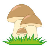 Boletus Mushrooms — Vector de stock