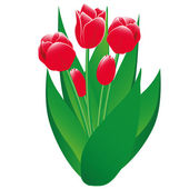 Red Tulips Isolated Object — Stock Vector