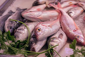 Fresh raw fish at the market  — Stock Photo