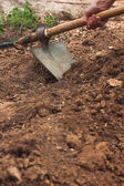 Working in vegetable garden with hoe — Stock Photo