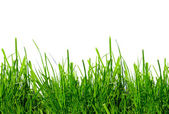 Green grass on a white background isolated — Stock Photo