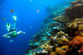 Underwater shooting man, coral reef with tropical fish — Stock Photo