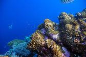 熱帯の魚とサンゴ礁の水中撮影 — ストック写真
