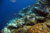 Underwater shooting coral reef with tropical fish — Stock Photo