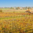 Stock Photo: Italian vineyard