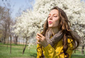Blowing dandelion — Stock Photo