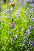 Sunny meadow — Stock Photo