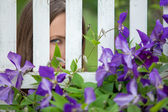 Spying through wooden fence — Stock Photo