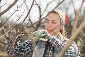 Jardinero trabajando en jardín — Foto de Stock