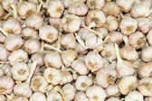 Garlic heads background — Stockfoto