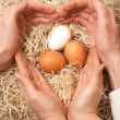 Men and women hands forming shape of heart on nest with eggs — Zdjęcie stockowe #41712803
