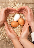 Men and women hands forming shape of heart on nest with eggs — Stock Photo