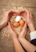 Men and women hands protecting nest and forming shape of heart — Stock Photo