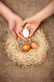 Men and women hands putting white egg in the nest with brown eggs — Stock Photo