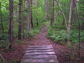 Appalachian Trail in Pennsylvania — Stock Photo
