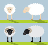 Simple flat illustration of sheep and ram. — Stock Vector