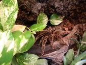 Tarantula — Stock Photo