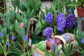 Llila hyacinths — Stock Photo
