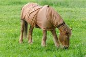 Horse with blanket — Stockfoto