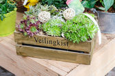 Flower box — Stock Photo
