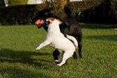 Kleinen hund — Stockfoto